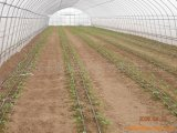 Casa verde do túnel econômico da agricultura para Growing vegetal