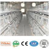 Клетки в доме цыплятины для фермы птиц цыпленка бройлера