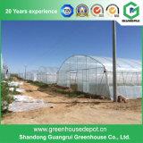 Лист PC/дом полиэтиленового пленки/стеклянных зеленая для овощей/сада