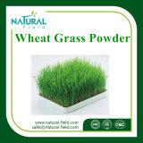 Weizen-Gras-Saft-Puder für verlieren Gewicht