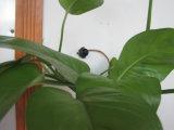 videosorveglianza di obbligazione del CCTV di lux basso dell'obiettivo 90deg VOA 520tvl 0.008 di 3.6mm l'audio mini con 2 installa i fori