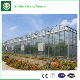 Wenlo Glasgewächshaus mit galvanisierter Stahlkonstruktion
