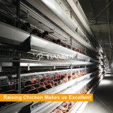 Système automatique d'aviculture pour des couches d'oeufs