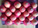 Qualität FUJI Apple (Qinguan Apfel, Huaniu Apfel)