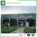 Casa verde da agricultura/passatempo de vidro comercial com sistema de ventilação