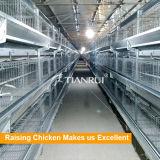 Автоматическая клетка бройлера цыпленка оборудования фермы бройлера