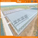 식물성 성장하고 있는을%s 유리제 다중 경간 녹색 집