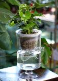 نفس حديثة يروي نافذة زراعة فوق الماء [فلوور بوت] بلاستيكيّة