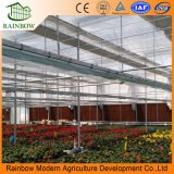 Изолированный полостью строя парник фасада стеклянный для овощей и завода