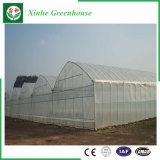 Verdure/serra film di materia plastica dell'azienda agricola