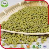 판매를 위한 Polished 녹색 녹두