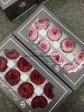 Las flores inmortales preservadas del paquete del regalo de las flores frescas nunca marchitaron rosas coloridas