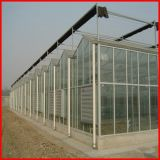 중국 Agricluture 다중 경간 판매를 위한 유리제 정원 온실