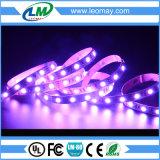 Indicatore luminoso di striscia chiaro di RGB LED di alta luminosità della Camera IP20 SMD5054