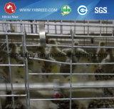 層のChikenの家のためのタイプ農場の自動繁殖動物のケージ