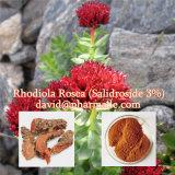 Pó do extrato de Rhodiola Rosea que contem 3% Salidroside