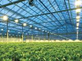 lampada del sodio 600W per la pianta che coltiva doppio 400V concluso