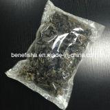 乾燥された黒い菌の白の背部