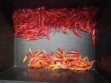 Classificador vermelho da cor do pimentão da máquina da transformação de produtos alimentares de Vsee RGB