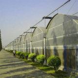 직류 전기를 통한 강철 구조물을%s 가진 중국 농업 PE 필름 온실