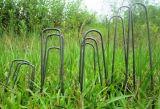 6インチの庭の景色は棒ピンを綴じる