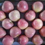 신선한 Qinguan Apple의 최상