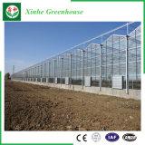 Serre chaude en aluminium en verre Tempered de cavité de bâti d'agriculture