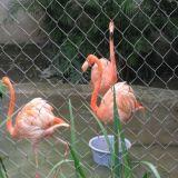 Pongidae малых животных вегетарианский Parrots сетка приложения