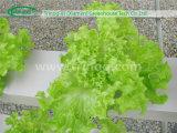 하이테크 농업을%s 전통적인 Hydroponic System