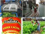 Linha de processamento do Nopal/planta produção do cacto