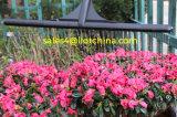 Головка сопла заграждения спрейера чонсервной банкы сада Ilot пластичная