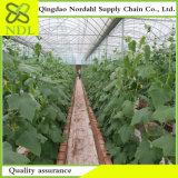 Approprié à la culture agricole des systèmes de culture hydroponique de serre chaude
