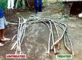 Unigrow 토양 조절기로 설치하는 사탕수수