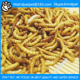 마이크로파에 의하여 말린 Mealworm 황색은 새 음식을 기어 나온다