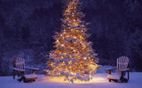 Decoração ao ar livre bonita do casamento da árvore de cereja do diodo emissor de luz
