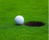 Hierba verde del deporte del golf, césped