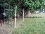 Rete fissa di /Cattle della rete fissa di /Grassland della rete fissa del metallo dell'azienda agricola