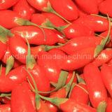 セイヨウカリンの有効なハーブの赤いGojiの果実