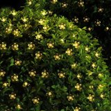 La luz solar al aire libre llevado para la planta del jardín de flores decorativo