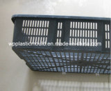 Cage de panier en plastique pour l'agrume / Concombre de mer / huîtres / Plantation de fruits de mer (BYK-1)