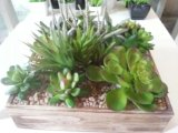 Plantas y flores artificiales de la planta suculenta Gu-SD-15130