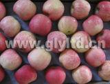 I cinesi esportano Apple fresco standard