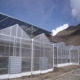 여분을%s 가진 판매를 위한 새로운 디자인 Venlo 온실 구조