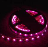 Striscia flessibile di SMD5050 60LED/M RGB LED