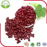 乾燥されたえんじ色の腎臓豆