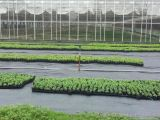 Estera agrícola del control de Weed