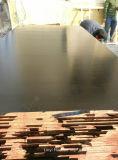 La película de la base del álamo hizo frente a la madera contrachapada para el encofrado concreto