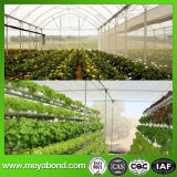 Virgin HDPE Anti Insect Net for Greenhouse