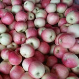 2016 Nueva Cosecha roja fresca Manzana gala