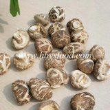 Cogumelo saboroso da flor selvagem bom para a saúde